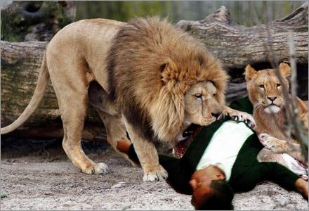 Under flera århundraden har lejon ätit människor i afrika.