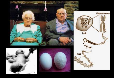 Gertrude och Günter är rädda för att myndigheterna ska ta deras dioxinbarn ifrån dem.