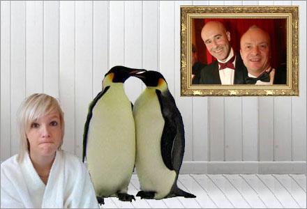 De homosexuella pingvinerna vårdar Johan Palm som han var deras egen son.