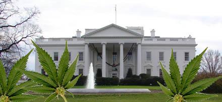 Powell lovar att Obama kommer sköta sig.