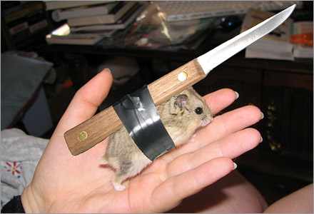 Denna hamster har tränats för dödliga attacker.