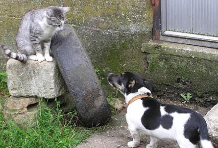 I åratal har hundar och katter missförståtts.