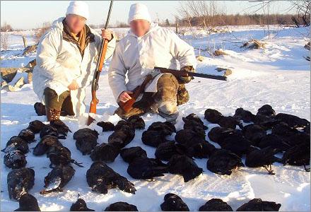 Nu slaktar jägare kråkor och andra smådjur i massor.