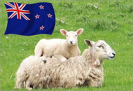 Barnaga har tagit över titlen från fårknullande som Nya Zeelands nationalsport.