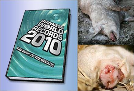 Rekordinspektionen kommer att införas i Guinness rekordbok.