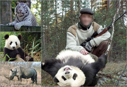 Svenska jägare har fått total hybris efter två vargjakter.