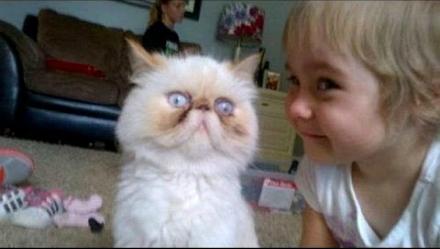 Katt och treåring.
